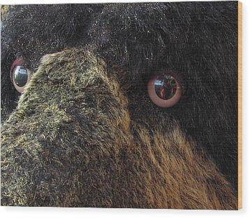 Wood Print featuring the photograph Alaskan Bear by Jennifer Wheatley Wolf