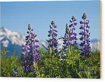 Alaskan Lupin Wood Print by Chris Heitstuman