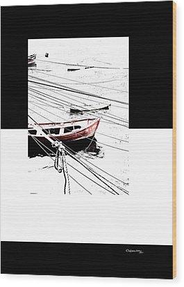 Albatros Wood Print by Xoanxo Cespon