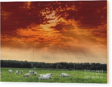 Wood Print featuring the photograph Alberta Canada Cattle Herd Hdr Sky Clouds Forest by Paul Fearn