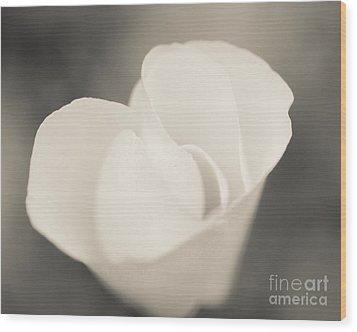 Albino Mexican Gold Poppy Wood Print by Tamara Becker