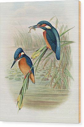 Alcedo Ispida Plate From The Birds Of Great Britain By John Gould Wood Print by John Gould William Hart