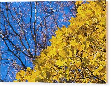 Alchemy Of Nature - Golden Streams Wood Print by Alexander Senin