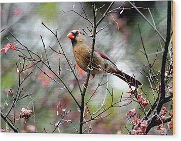 Alert - Northern Cardinal Wood Print