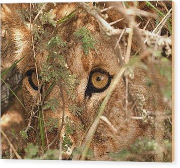 Alert Lion Wood Print by Nian Chen