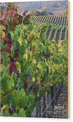 Alexander Valley Vineyard Wood Print by Craig Lovell