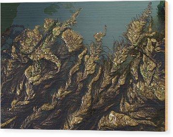 Algae Wood Print by Ron Harpham