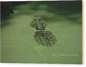 Algaegator..... Wood Print by Jerry Robertson