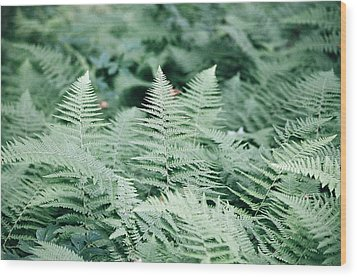 Wood Print featuring the photograph Algonquin Ferns by David Porteus