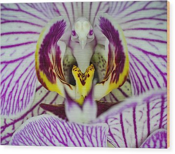 Alien Moth Orchid Wood Print by Kevin Munro