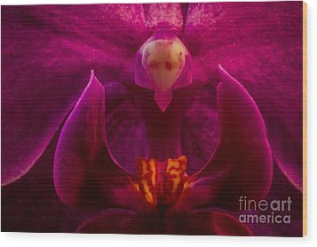 Alien Orchid Wood Print by Mitch Shindelbower