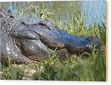 Alligator Smiling Wood Print