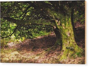 Alive Memory Of Thetrees. Glendalough. Ireland Wood Print by Jenny Rainbow