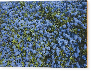 All Blue Wood Print by Svetlana Sewell