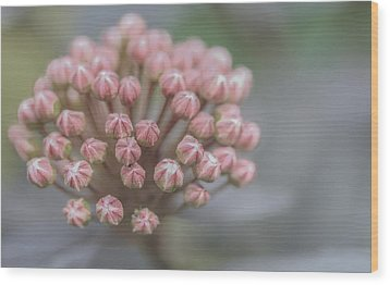 Wood Print featuring the photograph All Dressed In Pink And White by Jacqui Boonstra
