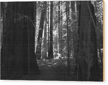 All Is Quiet Wood Print by Laurie Search