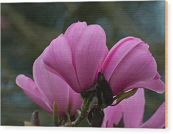 Wood Print featuring the photograph Pink Magnolia 2 by Sabine Edrissi