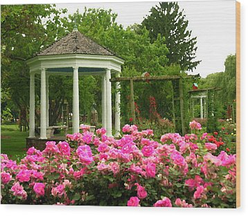 Allentown Pa Gross Memorial Rose Gardens Wood Print by Jacqueline M Lewis