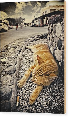 Alley Cat Siesta In Grunge Wood Print by Meirion Matthias