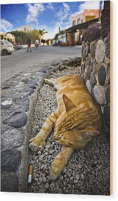 Alley Cat Siesta Wood Print by Meirion Matthias