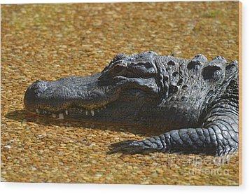 Alligator Wood Print by DejaVu Designs