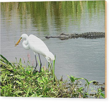 Alligator Egret And Shrimp Wood Print by Al Powell Photography USA