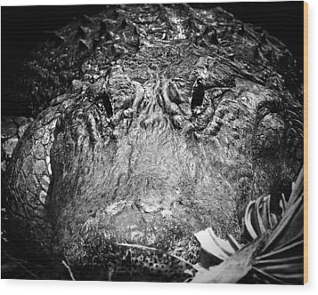 Alligator On Guard  Wood Print by Mark Andrew Thomas