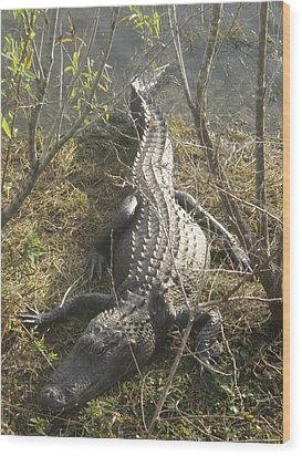 Wood Print featuring the photograph Alligator by Robert Nickologianis