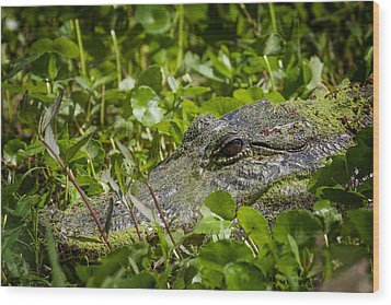 Wood Print featuring the photograph Alligator Taken At Brazos Bend by Zoe Ferrie