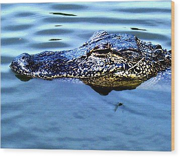 Alligator With Spider Wood Print by Robin Lewis
