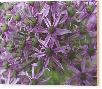 Wood Print featuring the photograph Allium by Gene Cyr