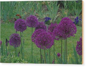 Wood Print featuring the photograph Allium Giganteum by Ken Dietz