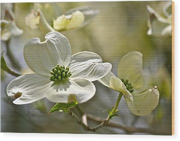 Alluring Dogwoods Wood Print by Eve Spring