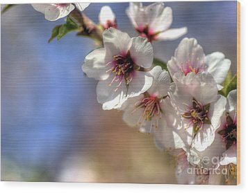 Wood Print featuring the photograph Almond Blossoms by Jim and Emily Bush