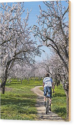 Almond Orchards In Full Bloom Wood Print