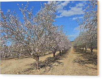 Almond Trees Wood Print