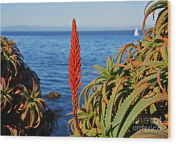 Aloe Arborescens Flowering At Pacific Grove Wood Print by Susan Wiedmann