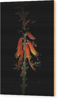 Wood Print featuring the photograph Aloe Flower by Leticia Latocki