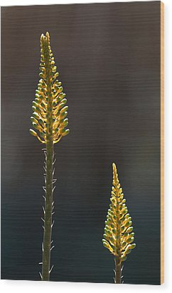 Aloe Plant Wood Print by Tam Ryan