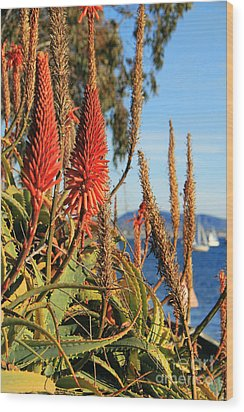 Aloe Vera Bloom Wood Print by Mariola Bitner