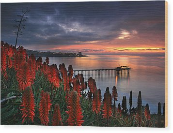 Aloes Last Light Wood Print