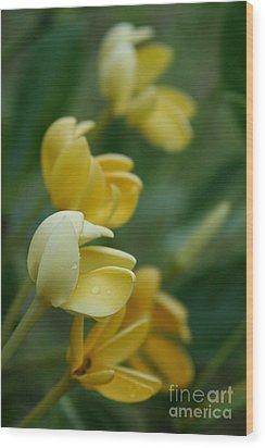 Aloha He Pua Lahaole Kula Gardenia Grandiflora Wood Print by Sharon Mau