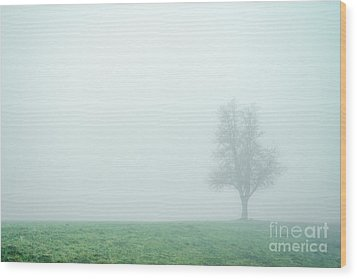 Alone In The Fog - Green Wood Print by Hannes Cmarits