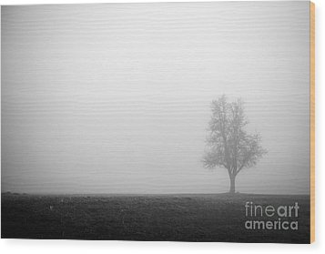 Alone In The Fog - Bw Wood Print by Hannes Cmarits