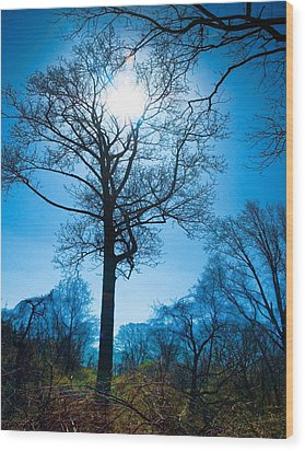 Wood Print featuring the photograph Alone In The Woods by Robert Culver