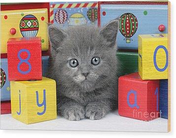 Alphabet Cat Ck415 Wood Print by Greg Cuddiford