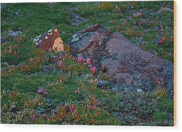 Wood Print featuring the photograph Alpine Blush by Jim Garrison