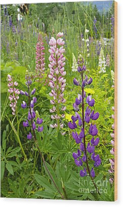Alpine Lupines Wood Print