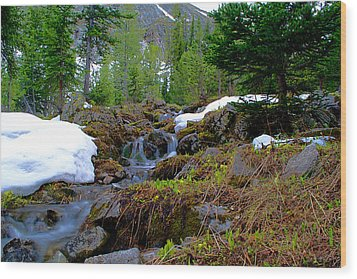 Wood Print featuring the photograph Alpine Spring  by Kevin Bone