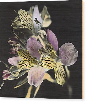 Wood Print featuring the photograph Alstroemeria by Lana Enderle